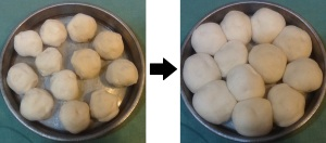 yeast rolls rising